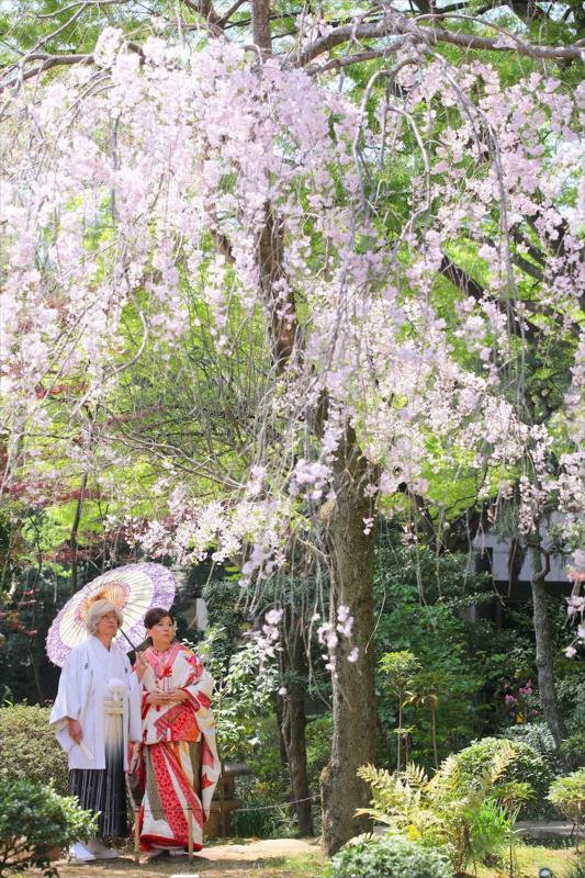 桜の樹の下にて